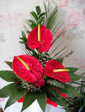 Buchet de 3 Anthurium flamingo