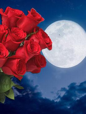 Buchet de trandafiri rosii - Pasiune si admiratie