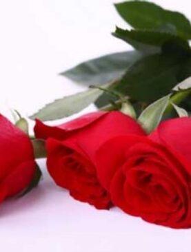 Trandafiri Rosii - Trei Dorinte