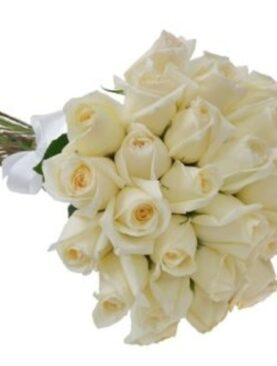Trandafiri Albi - Sentimente Genuine
